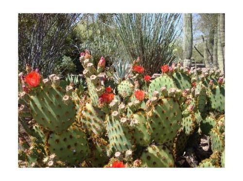 3443499-The_desert_in_bloom_Phoenix