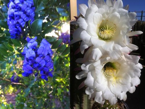 sprinigflowers